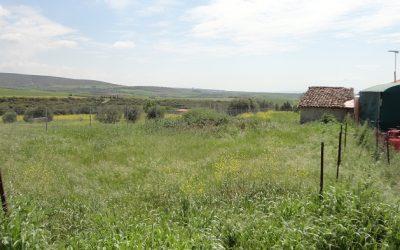 Οικόπεδο 902 τ.μ. στον Ροδόκηπο Χαλκιδικής προς πώληση.