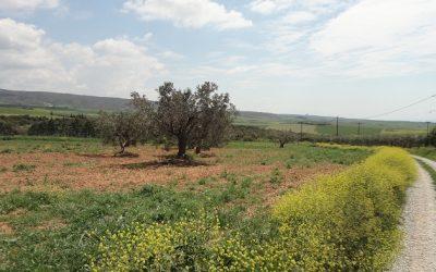 Αγροτεμάχιο 2500 τ.μ. στον Ροδόκηπο Χαλκιδικής προς πώληση.